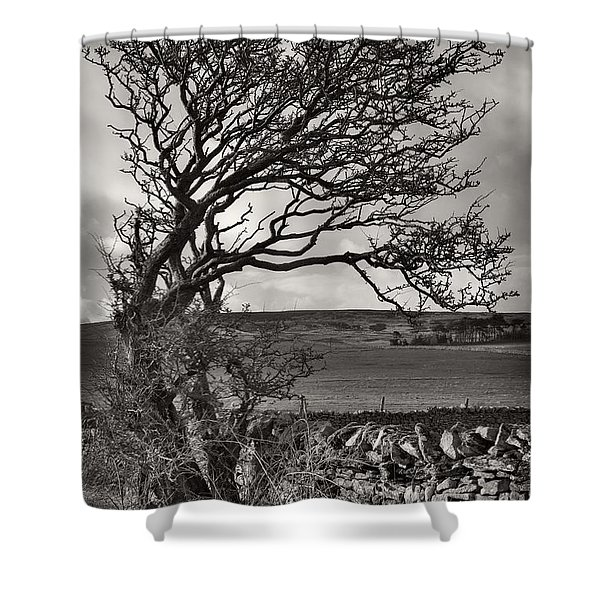 Windswept Tree In Winter Shower Curtain