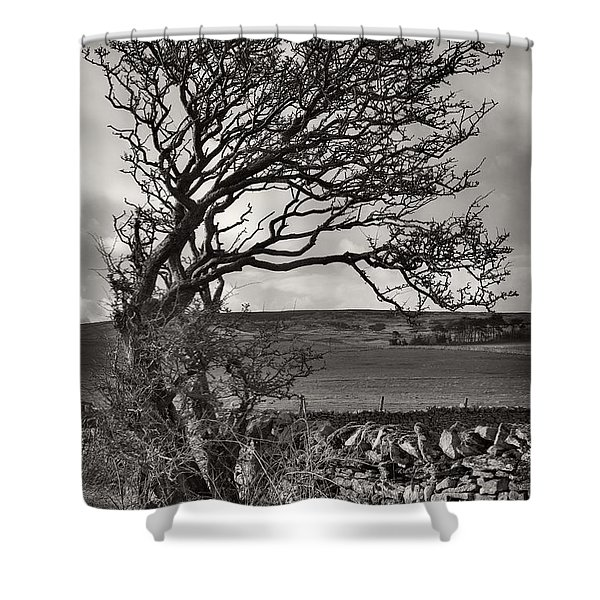 Windswept Tree In Winter Shower Curtain
