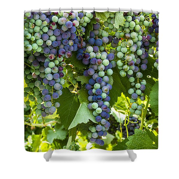 Wine Grape Colors Shower Curtain
