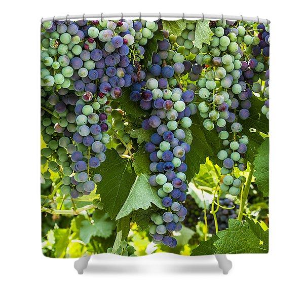 Wine Grape Colors Shower Curtain
