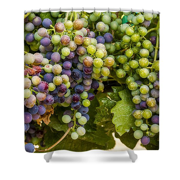 Wine Grapes On The Vine Shower Curtain