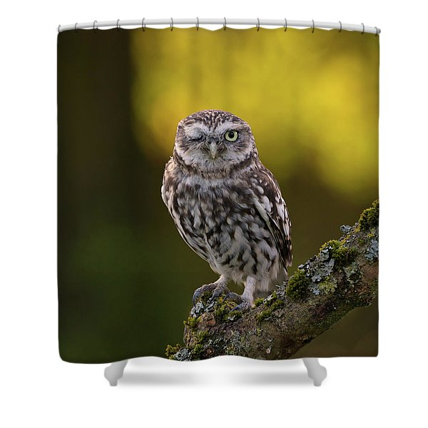 Winking Little Owl Shower Curtain