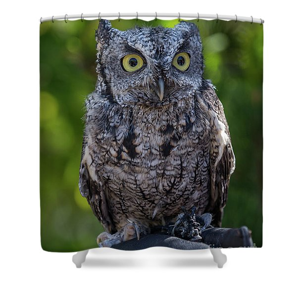Winston Wildlife Art By Kaylyn Franks Shower Curtain