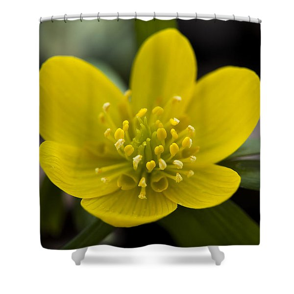 Winter Aconite Shower Curtain