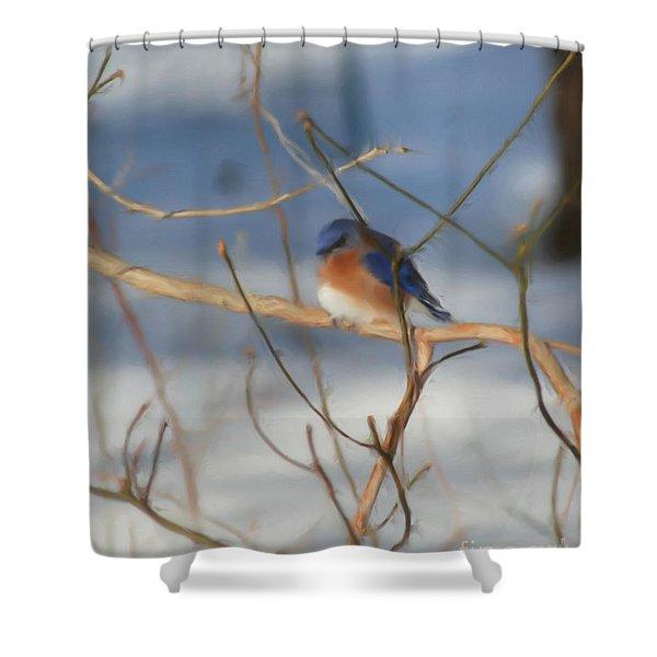 Winter Bluebird Art Shower Curtain