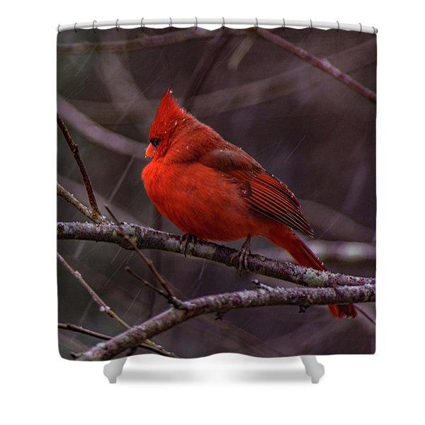 Winter Crimson  Shower Curtain