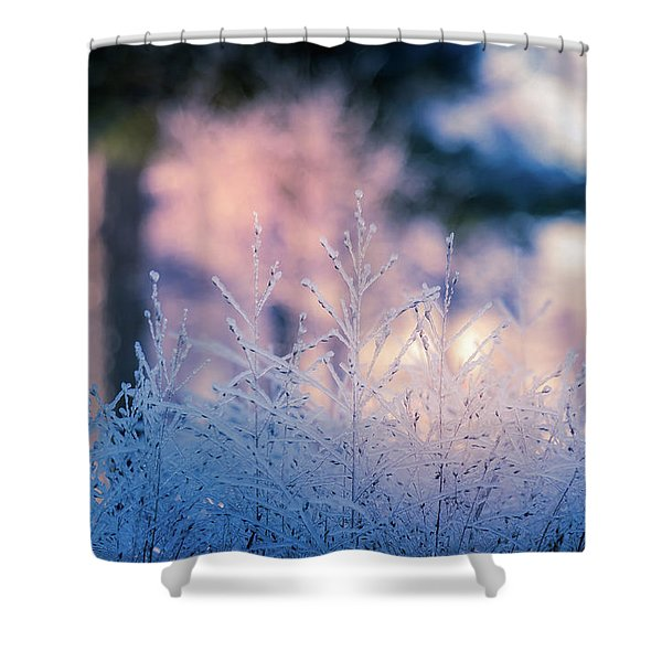Winter Morning Light Shower Curtain