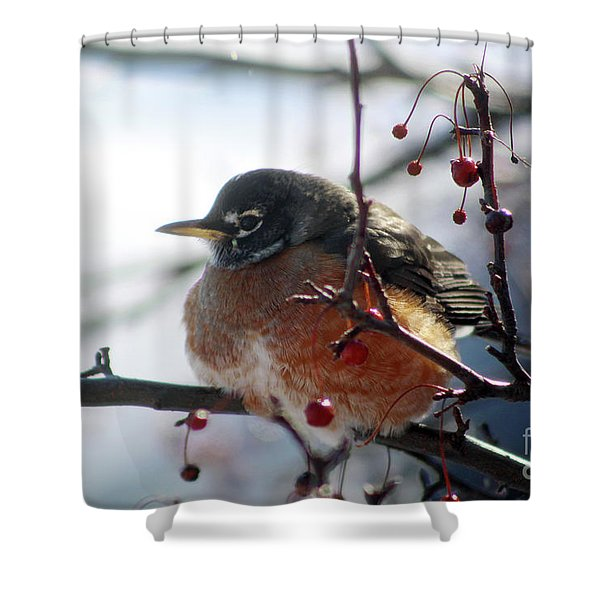 Winter Robin Shower Curtain