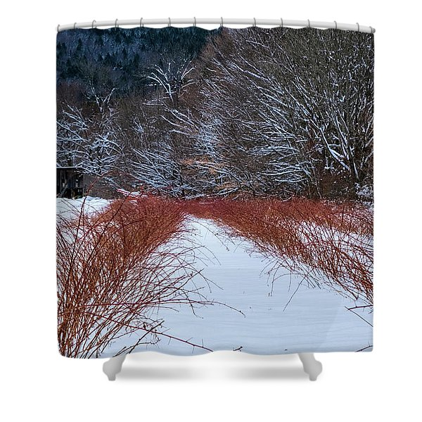 Shower Curtain featuring the photograph Winter Scene by Tom Singleton