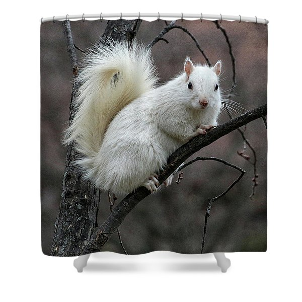 Shower Curtain featuring the photograph Winter Squirrel by William Selander