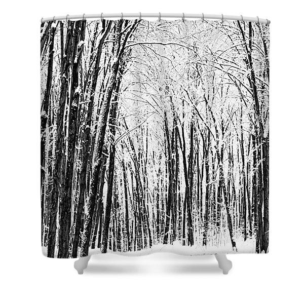 Winter Startk Shower Curtain