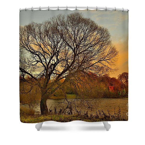 Winter Tree On The River Tweed Shower Curtain