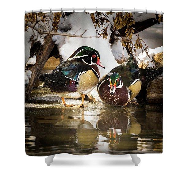 Winter Visitors - Wood Ducks Shower Curtain