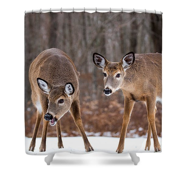 Winter White Tail Deer Shower Curtain
