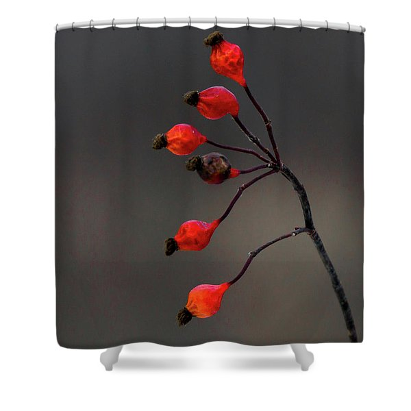Winterberry Cowles Bog Shower Curtain