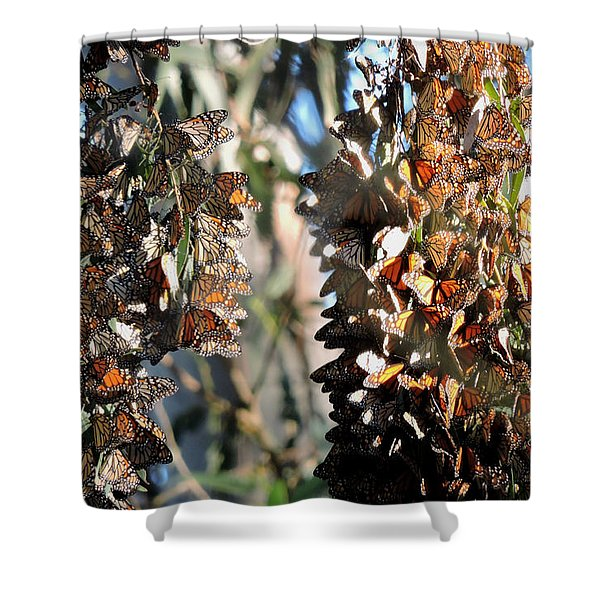 Wintering In Santa Cruz Shower Curtain