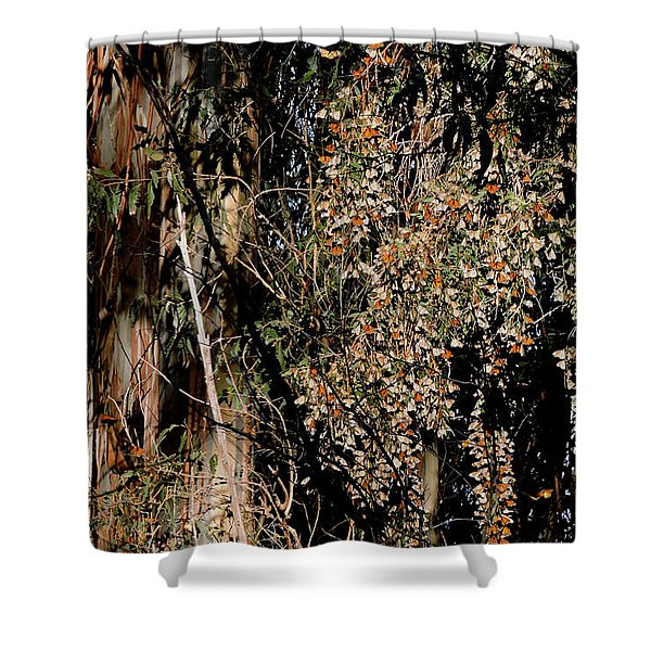 Wintering Monarchs Shower Curtain