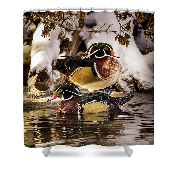 Wintering Wood Ducks Shower Curtain