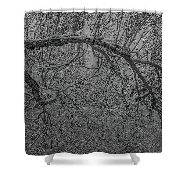 Wintery Tree Shower Curtain