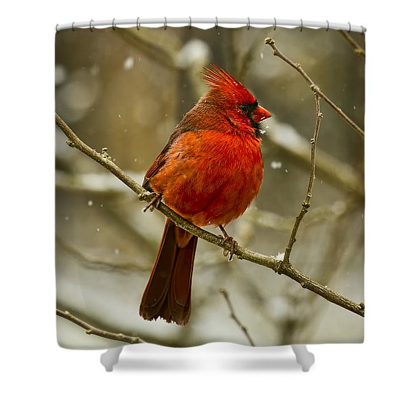 Wintry Cardinal Shower Curtain