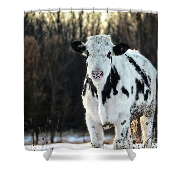 Wisconsin Dairy Cow Shower Curtain