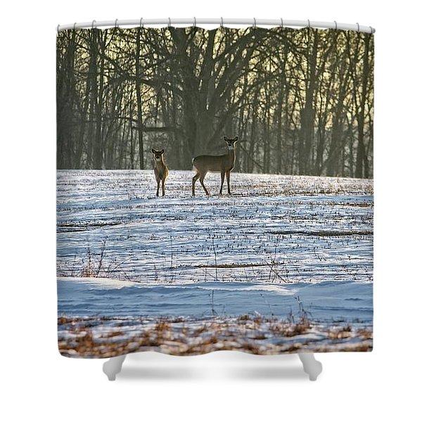 Wisconsin Whitetail Deer Shower Curtain