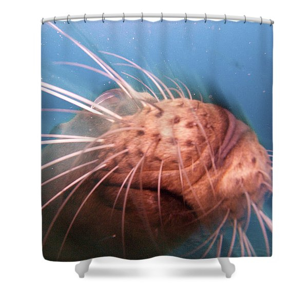 Wiskers And A Nose Of Sea Lion Shower Curtain