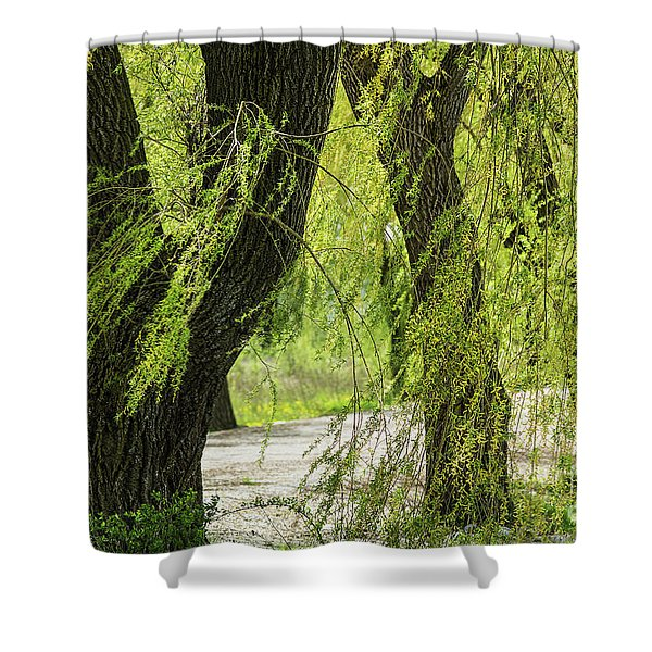 Wispy Willows-2 Shower Curtain