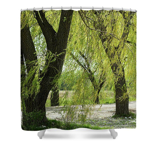 Wispy Willows-1 Shower Curtain