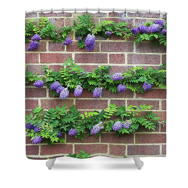 Wisteria Frutescens Longwood Purple Shower Curtain