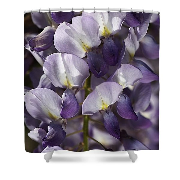 Wisteria In Spring Shower Curtain