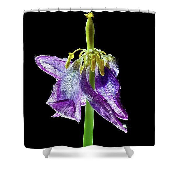 Withering Beauty Shower Curtain