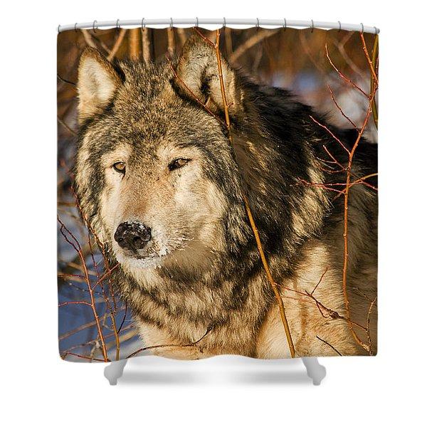 Wolf In Brush Shower Curtain