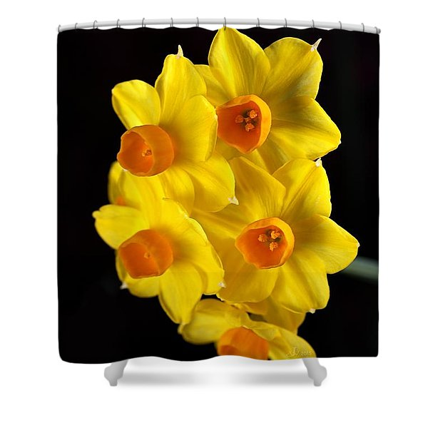 Wonderful Jonquils Shower Curtain