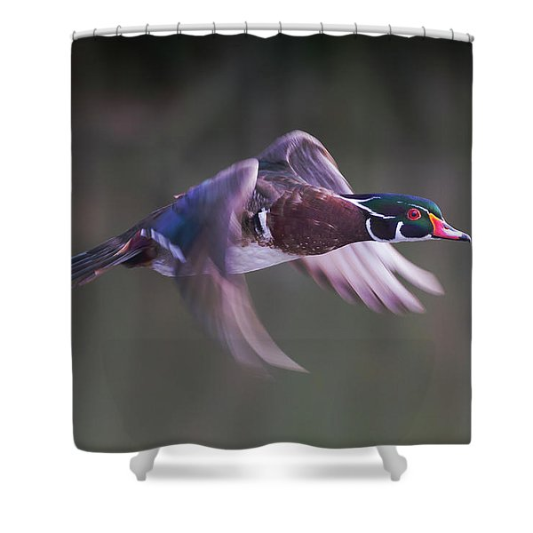 Wood Duck Flight Shower Curtain