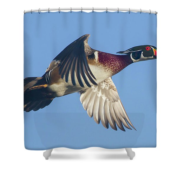 Wood Duck Flying Fast Shower Curtain