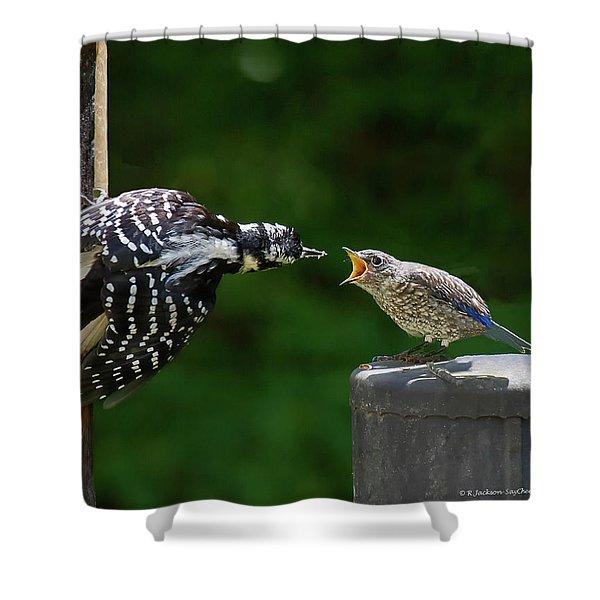 Woodpecker Feeding Bluebird Shower Curtain
