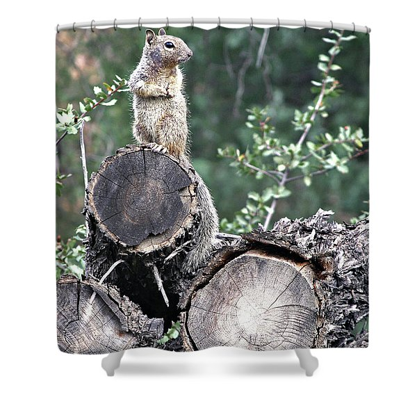 Woodpile Squirrel Shower Curtain