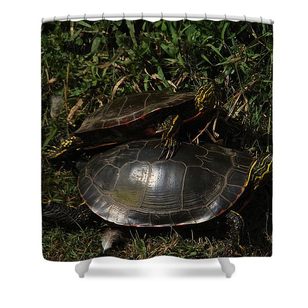 Wrestle Mania Painted Turtle Stlye Shower Curtain