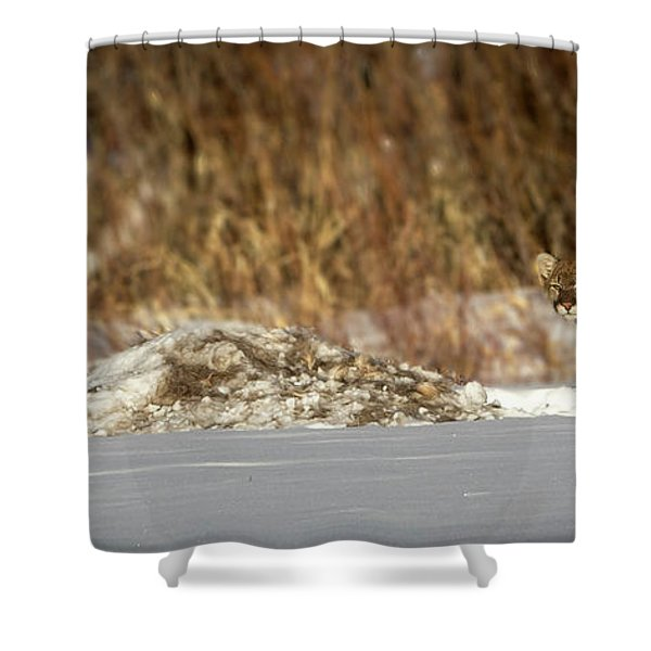Yampa Glare  Shower Curtain