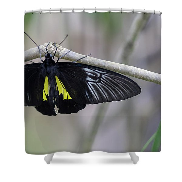 Yellow And Black Butterfly Shower Curtain