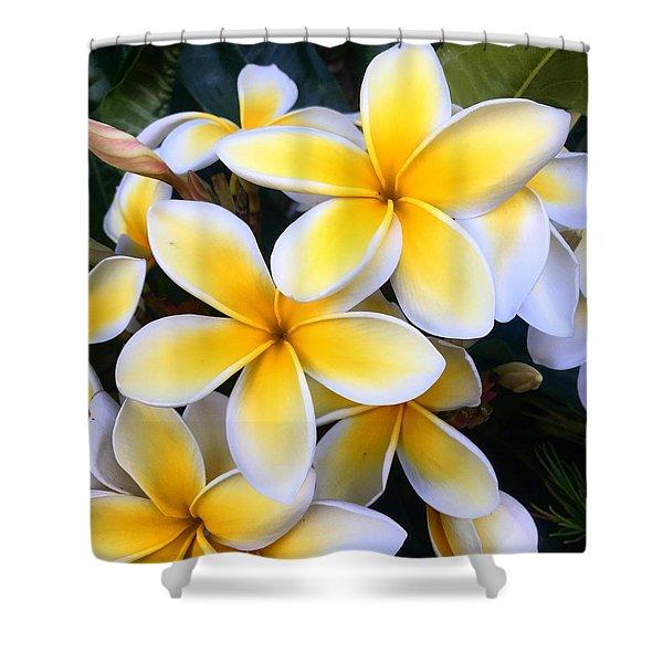 Yellow And White Plumeria Shower Curtain