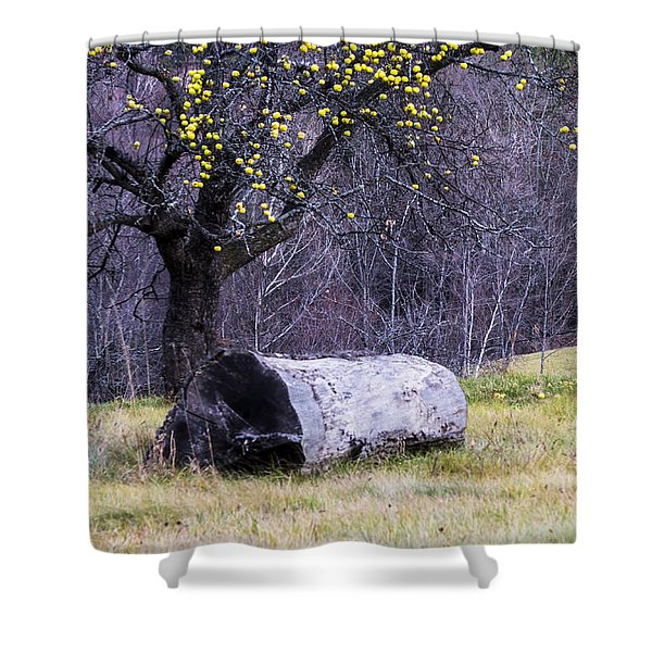 Shower Curtain featuring the photograph Yellow Apples by Tom Singleton