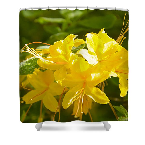 Yellow Azaleas Shower Curtain
