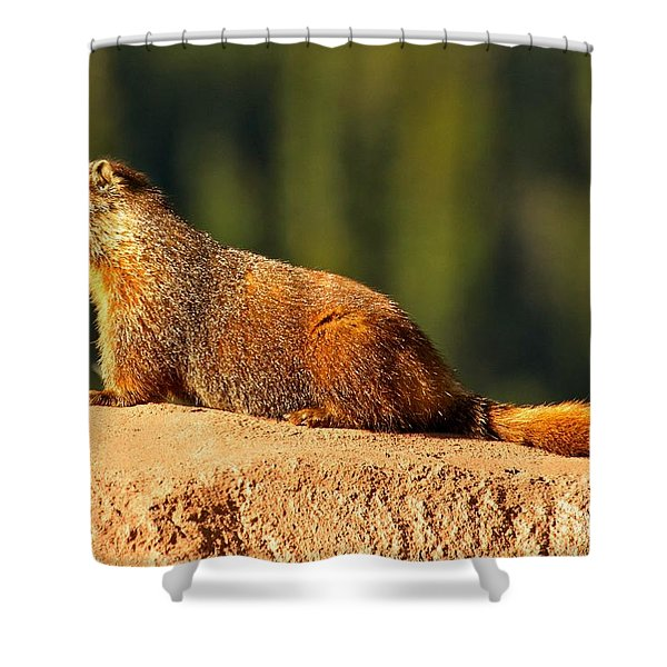 Yellow Bellied Marmot Shower Curtain