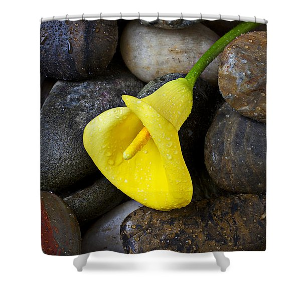 Yellow Calla Lily On Rocks Shower Curtain