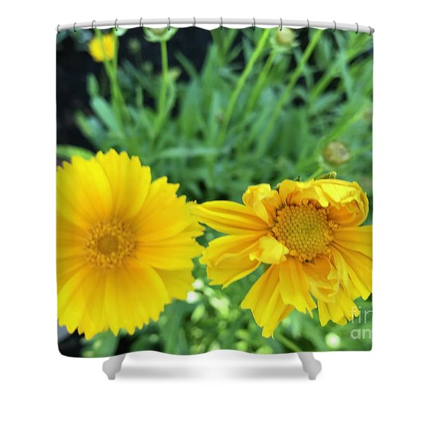 Yellow Coreopis Shower Curtain