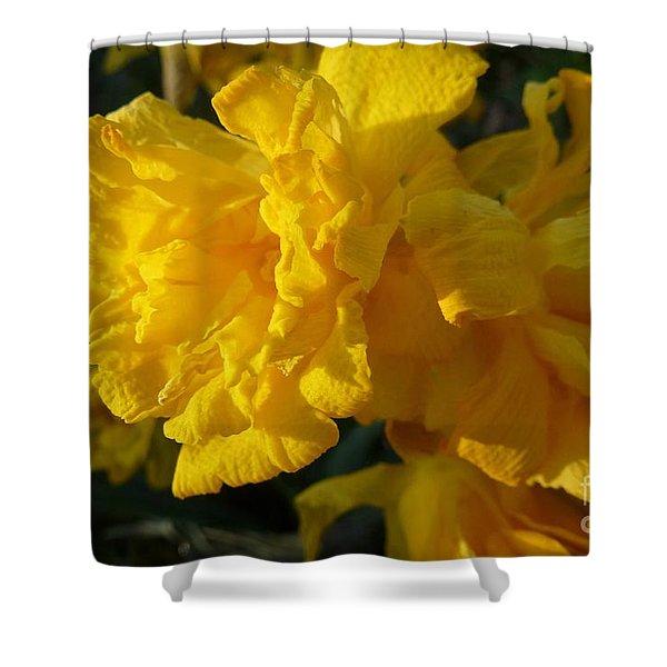 Yellow Daffodils Shower Curtain