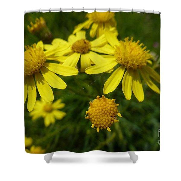 Yellow Daisies 2 Shower Curtain