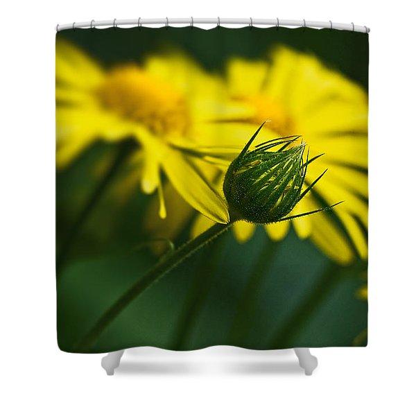Yellow Daisy Bud Shower Curtain